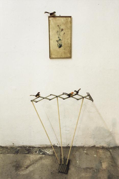 zogjet